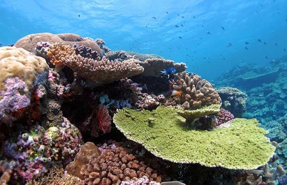 Coral reefs at severe risk as world's oceans become more acidic